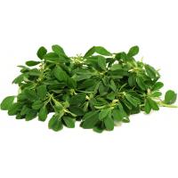 حلبة خضراء (حزمة كبيرة)