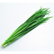 Leek (Bundle)