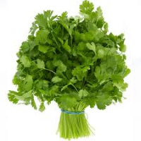 Coriander (Bundle)